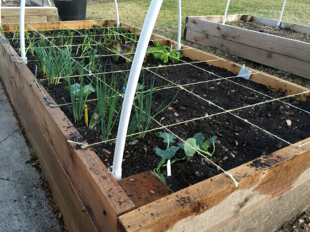 How to Save Money on Gardening What to Buy What to Plant