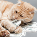 How to Find Low-Cost Veterinary Care so You Can Afford the Bills