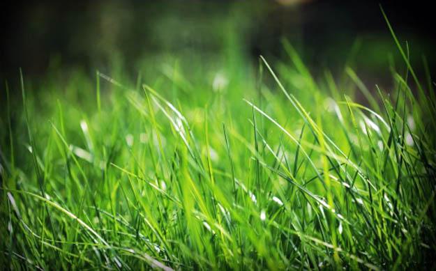 El césped puede ser más verde de tu lado de la cerca