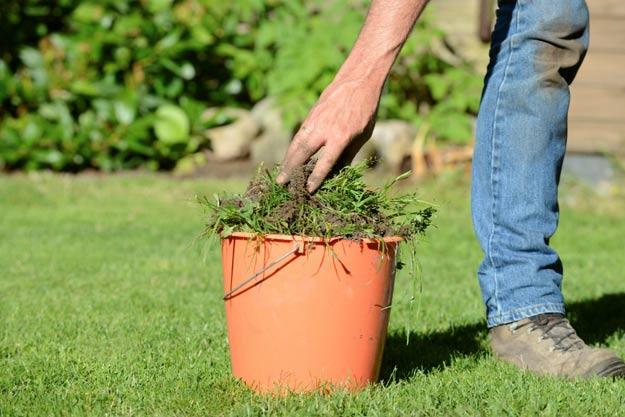 Ataca las hierbas malas y plagas a tiempo