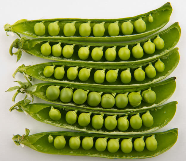 Garden peas in pods