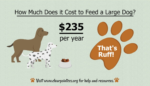 cost to feed large dog