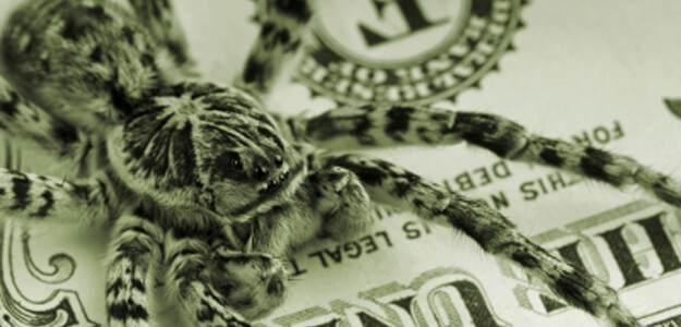 Spider on money