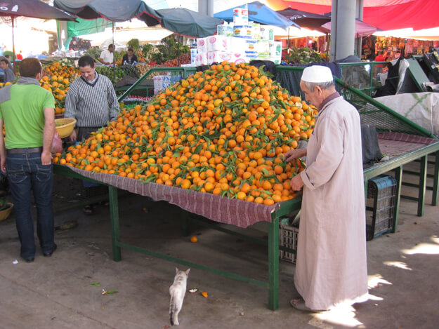 in season oranges