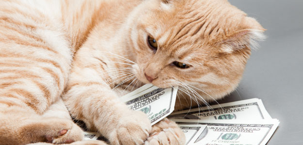 Cat in money